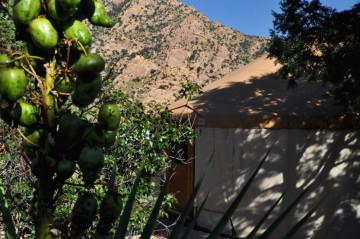 Yurt Yucca fruit 1280x850